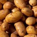 Ziektes en plagen bij Aardappelen