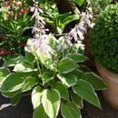 Ziektes en plagen bij Potplanten algemeen