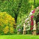 Ziektes en plagen bij Struiken, bomen, houtige gewassen